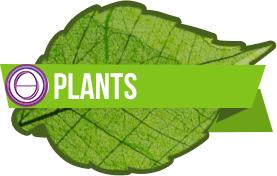 ThetaHealing® Pflanzen Seminar